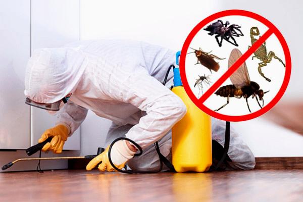 شركة الصفرات لمكافحة الحشرات بالرياض 0507067378