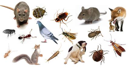 شركة مكافحة حشرات شرق الرياض 0552777862