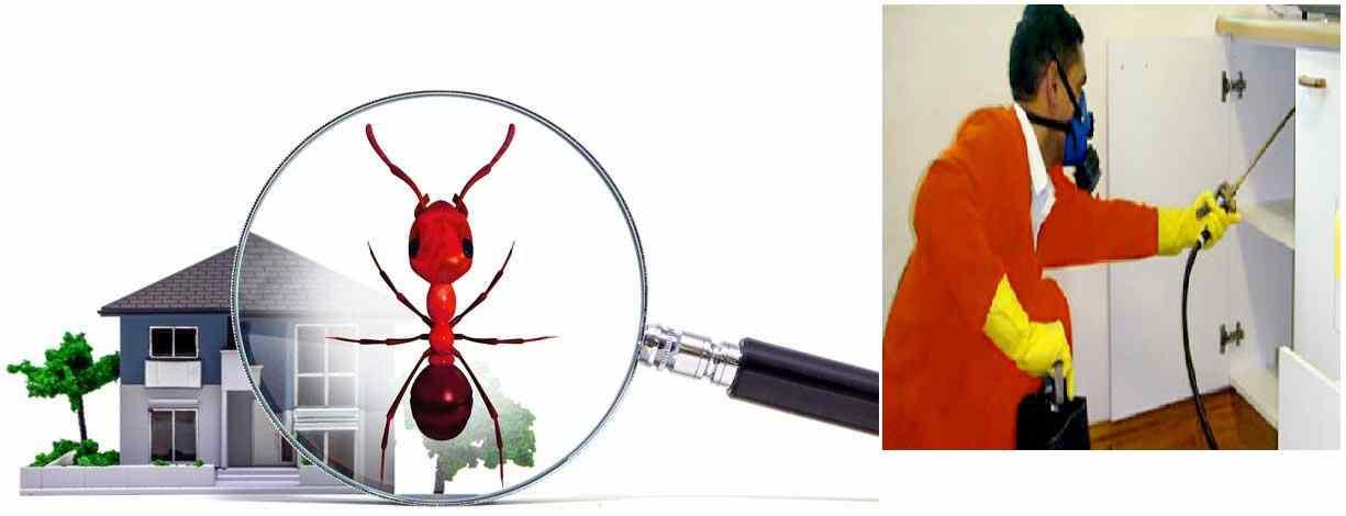 شركة مكافحة النمل الاسود بالرياض 0507067378